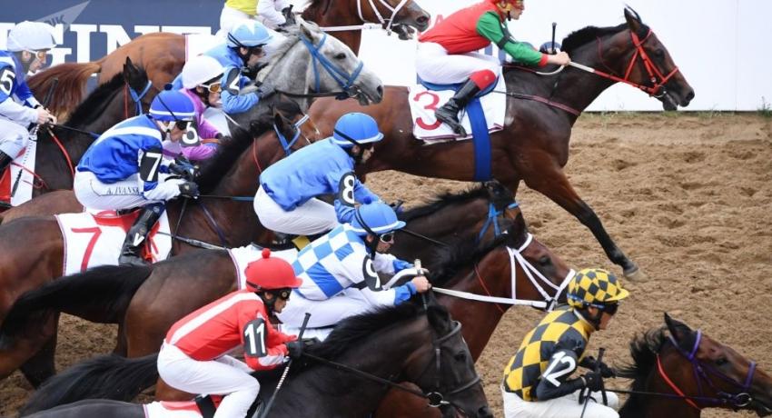 Абхазские лошади победили на соревнованиях в Ростове-на-Дону